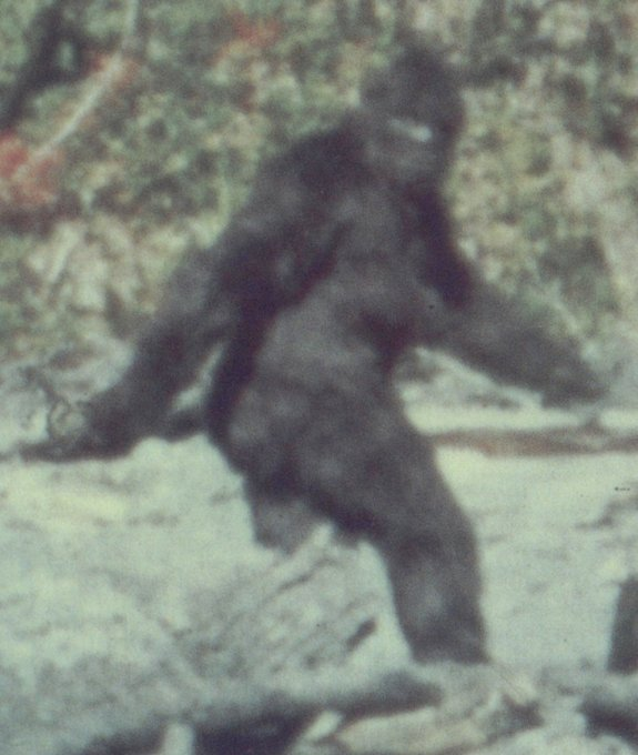 famous image of a Bigfoot